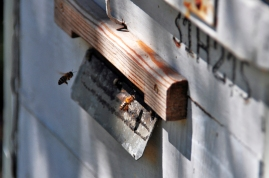 a simpler life el pocito bees spanish bee hive 01