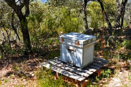 a simpler life el pocito bees spanish bee hive 02