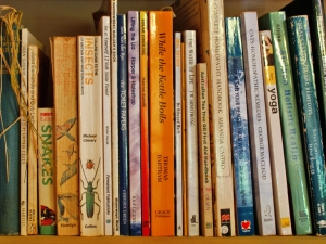 a simpler life el pocito books