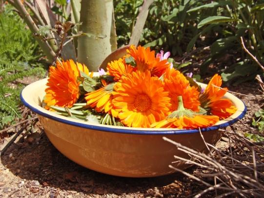 a simpler life el pocito bowl of fresh picked herb tea