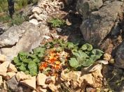 a simpler life el pocito compost 02