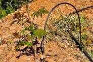 a simpler life el pocito irrigation 04