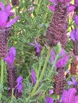 a simpler life el pocito plants 08