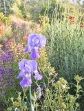 a simpler life el pocito plants 10