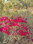 a simpler life el pocito plants 11