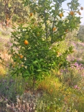 a simpler life el pocito plants 14