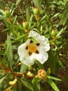 a simpler life el pocito plants 34