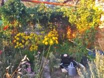 a simpler life el pocito plants 47