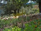 a simpler life el pocito tea garden 04