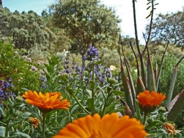 a simpler life el pocito tea garden 05