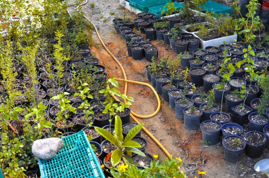 a simpler life el pocito trees in pots