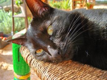 a simpler life el pocito cats 07