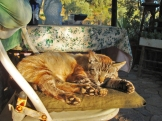 a simpler life el pocito cats 08