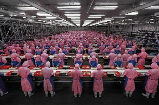 Edward-Burtynsky-Manufacturing-17-Deda-Chicken-Processing-Plant-Dehui-City-Jilin-Province-2005-880x587